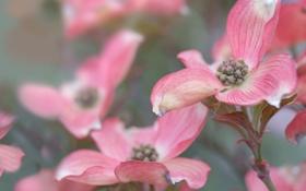 Обои листья, цветы, ветки, растение, лепестки, клумба, прожилки