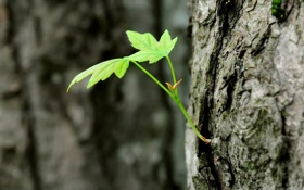 Картинка зелень, деревья, природа, дерево, стволы, листва, листок