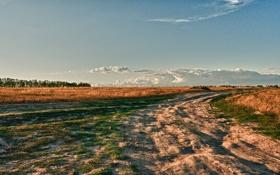 Картинка поле, облака, пейзаж, земля, день, простор, Свобода