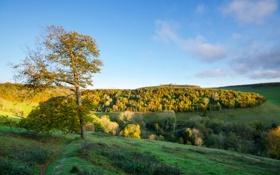 Картинка лес, осень, трава, небо, облака, холмы, дерево