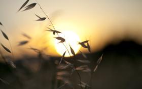 Картинка лето, трава, солнце, макро, закат