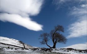 Картинка природа, пейзаж, небо, весна, дерево