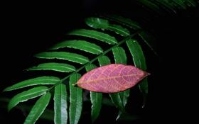 Картинка осень, листья, лист, цвет, ветка, полумрак