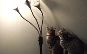 Обои свет, лампа, смотрят