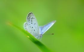Обои бледно-голубая, травинка, лист, бабочка