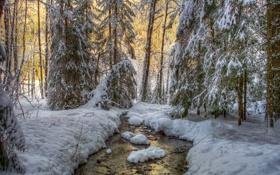Обои зима, лес, снег, деревья, ручей