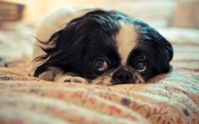 Картинка глаза, уют, дом, собака