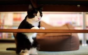 Обои кот, дом, черно-белый, внимание, перекладина