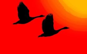 Обои солнце, свет, птицы, крылья, силуэт, зарево