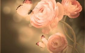 Обои бабочки, лепестки, бутоны, цветение, азиатский лютик