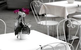 Обои белый, цветы, стол, фон, розовый, widescreen, обои