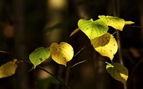 Картинка осень, листья, макро, природа, фото, обои, растения