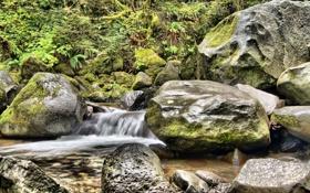 Обои листья, река, ручей, камни, каскад, кусты