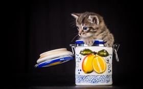 Картинка кошка, фон, банка