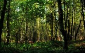 Обои листья, леса, деревья, природа, фото, растения, красивые обои