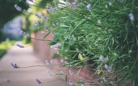 Картинка зелень, трава, цветы