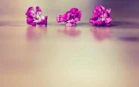 Обои поверхность, цветы, сухие, три