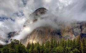 Картинка лес, облака, природа, туман, гора