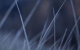 Картинка поле, трава, стебли, стебель, травинка, стебельки, травинки