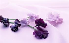 Обои ткань, сиреневые, горошек, веточки, нежные, цветы