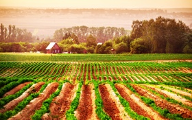 Картинка трава, деревья, земля, дома, дымка