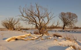 Обои зима, пейзаж, поле, дерево