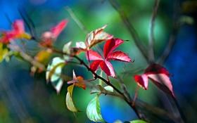 Обои листья, природа, яркие, растения, ветка, цвета