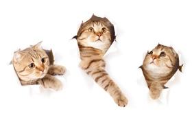 Обои фото, Взгляд, Котята, Животные, Трое