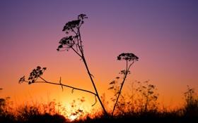 Картинка небо, трава, макро, закат, растение, силуэт, зарево