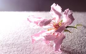 Обои цветок, поверхность, розовый, лепестки