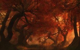 Картинка осень, лучи, деревья, тень