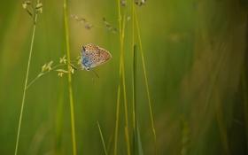 Картинка растения, бабочка, травинки