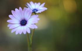 Картинка цветок, макро, природа, зеленый, блики, сиреневый, цвет