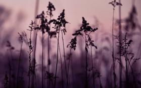 Картинка цвета, природа, фон, обои, тень, растения, вечер