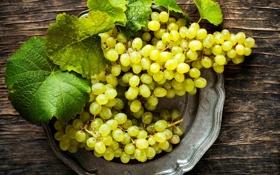 Обои листья, тарелка, виноград, белый, грозди, ягоды
