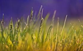 Картинка лето, трава, макро