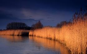 Картинка небо, природа, отражение, река, камыш