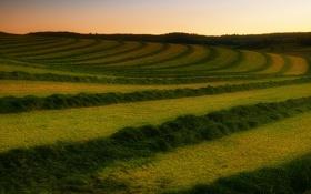 Обои поле, трава, весна, скошено
