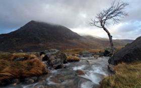 Картинка пейзаж, горы, река, дерево