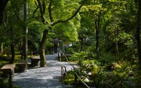 Обои лавочки, дорожка, парк, деревья, прогулка