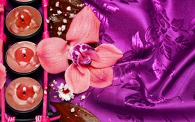 Обои цветок, романтика, свечи, flower, атлас, romance, candles
