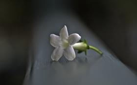 Картинка фон, макро, цветок