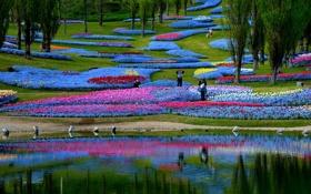 Картинка деревья, цветы, пруд, парк, склон, клумба