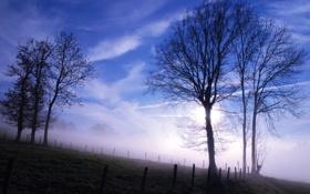 Обои небо, деревья, туман, утро