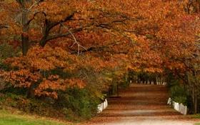 Картинка дорога, осень, листья, деревья, парк