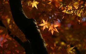 Обои листья, макро, свет, ветки, природа, дерево, Осень