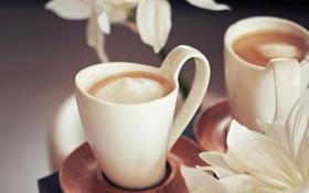 Картинка цветы, кофе, сливки, чашки, напиток, белые