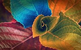 Обои листья, макро, краски
