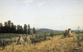 Обои картина, Шишкин, Пейзаж Полесья