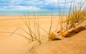 Обои песок, море, небо, трава, листья